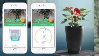 Le Parrot Pot ou comment prendre soin de ses plantes à distance avec une simple appli smartphone